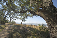 Bloody Point, Daufuskie Island